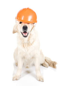 A dog with a workmans hat on